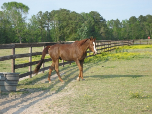 April 2007 at the barn