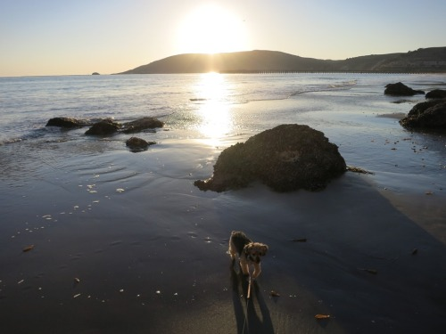 Dog friendly part of the day - Avila Beach, CA at sunset.